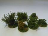 Spring Bushes PR130 - 2